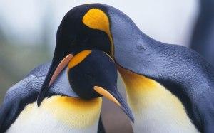penguin method review